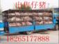 山东仔猪苗猪供应基地18265177888三元仔猪价格